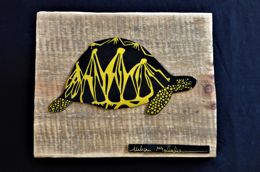 tortue-T2